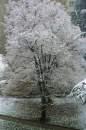 Дърво в градинката на Баня Пиперка
